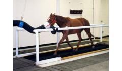 Oddychanie konia